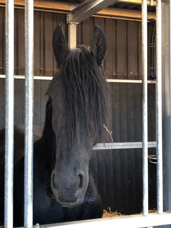 Een van de paarden die gebruikt word voor de lessen